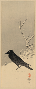 Blackbird Near Reeds In Snow. Image