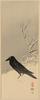 Blackbird Near Reeds In Snow. Image