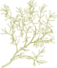 Green Olive Tree Clip Art