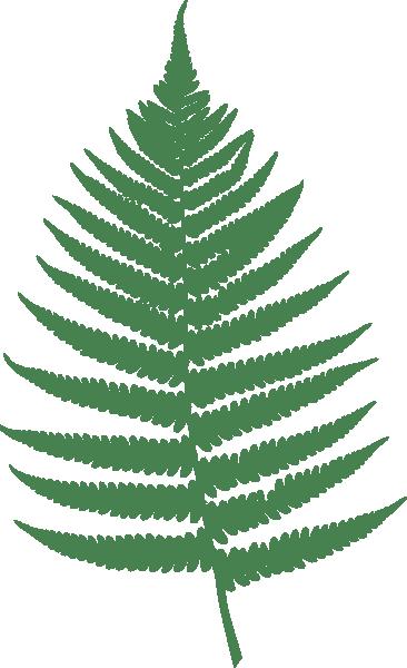 fern leaf clip art at clker com vector clip art online royalty rh clker com fern clip art free fern clip art free
