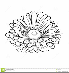 Clipart Lines Flowers Image