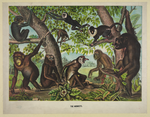 The Monkeys Image