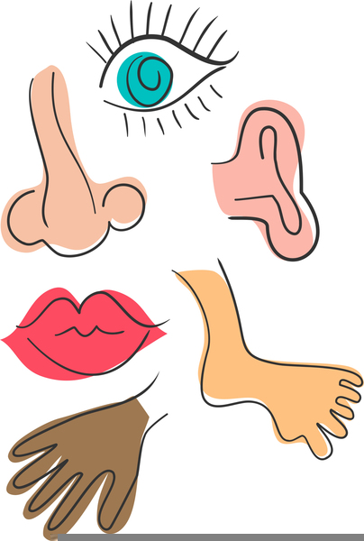 Body Parts Nose Clipart | Free Images at Clker.com ...