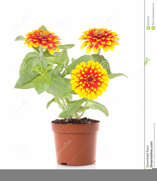 Free Clipart Spring Flowers Free Images At Clker Com Vector Clip