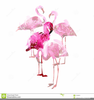 Pink Flamingo Clipart Free Image