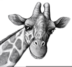 Animal Pencil Drawing Image