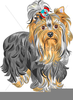 Free Yorkshire Terrier Clipart Image