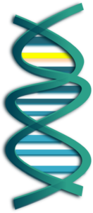 Modified Dna Clip Art