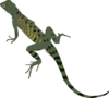 Green Black Lizard Clip Art