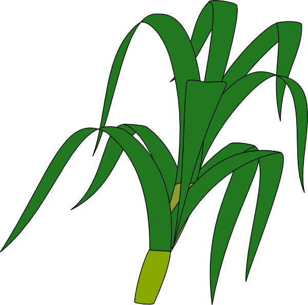 corn stalk clip art at clker com vector clip art online royalty rh clker com