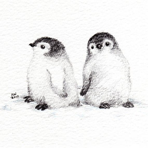 Baby Penguin Sketches Image