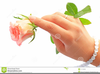 Hand Holding Rose Clipart Image