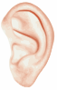 Human Ear Clip Art