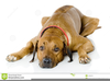 Dog Lying Down Clipart Image
