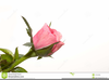 Clipart Red Rose Bud Image