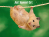 Funny Hamster Image