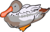 Gray And Brown Duck Art Clip Art