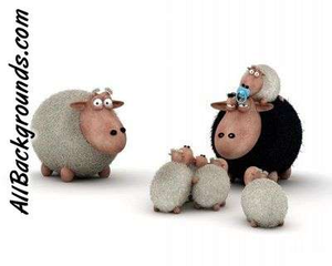 Sheep Family Image