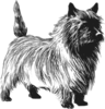 Cairn Terrier Drawing Clip Art
