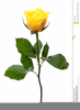 Clipart Yellow Rose Bud Image