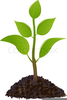 Free Clipart Of Planting Seeds Image