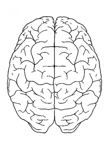 Photo brain top view p free images at clker vector clip download this image as ccuart Choice Image