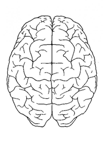 Photo Brain Top View P Image