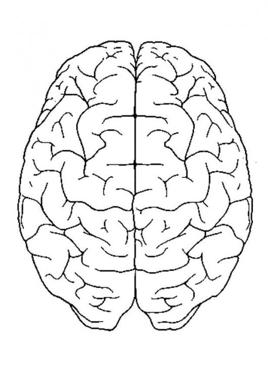 Images of brain diagram top view spacehero photo brain top view p free images at clker vector ccuart Choice Image