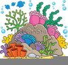 Coral Draw Clipart Image