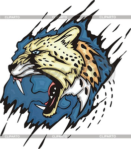 Cheetah Hr Image