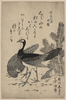 Wildfowl And Pine. Image
