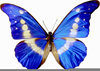 Free Clipart Butterfly Pictures Image