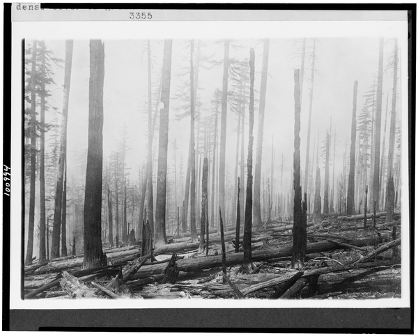 Oregon National Forest - Effect Of Fire On An Old Burn ...
