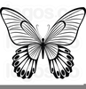 Free Clipart Flowers And Butterflies Image