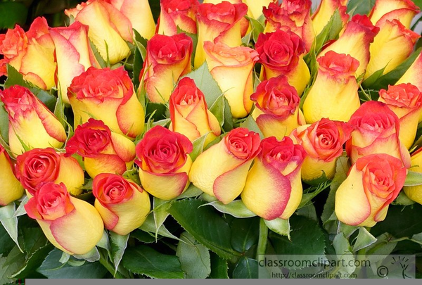 Yellow Roses Clipart Free Images At Clker Com Vector Clip Art Online Royalty Free Public Domain