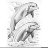 Dolphin Drawings Pencil Image