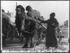 [harriet Chalmers Adams, With Camel Pulling Cart, Gobi Desert] Image