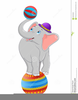 Elephant Playing Ball Image