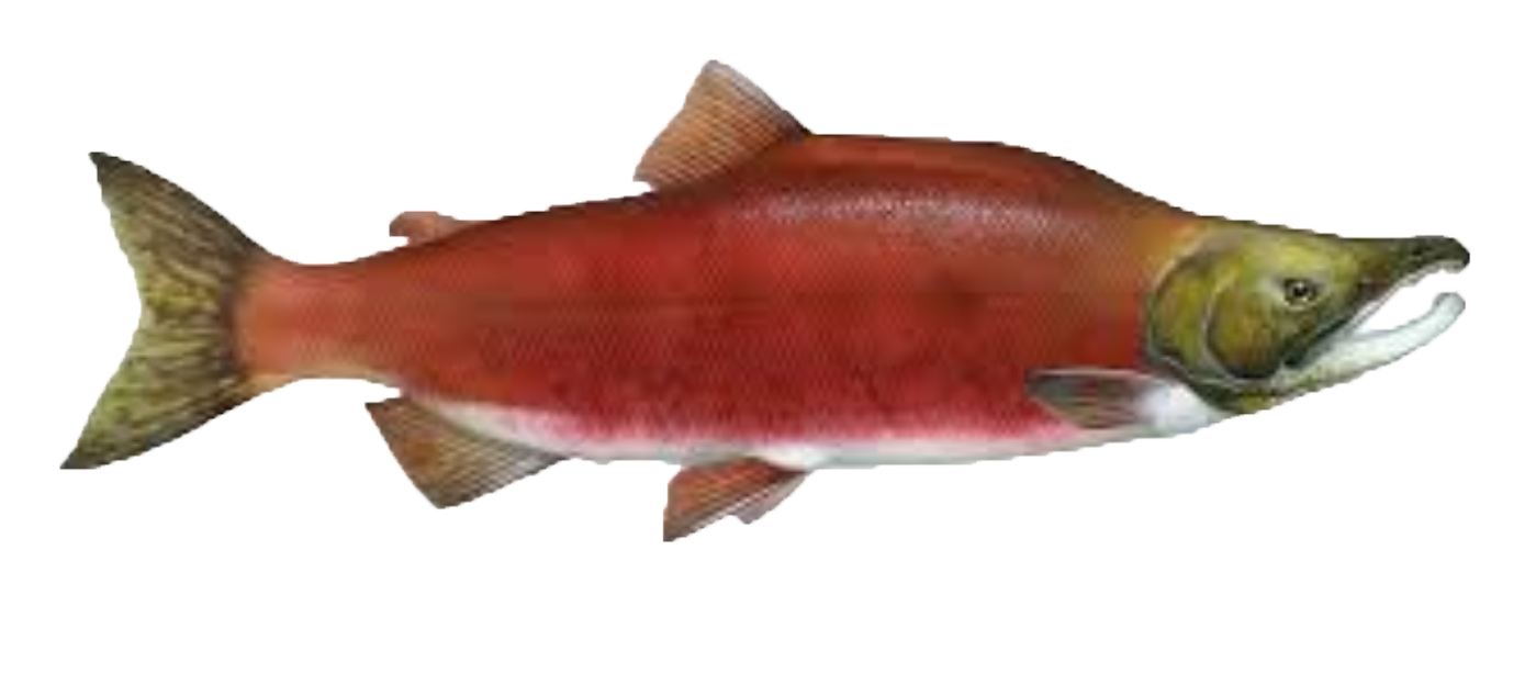 Salmon free images at vector clip art online for Salmon fish images