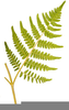 Fern Drawing Clipart Image