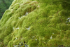 Moss Reproduction Clipart Image