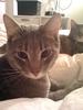 Cat 29 Image
