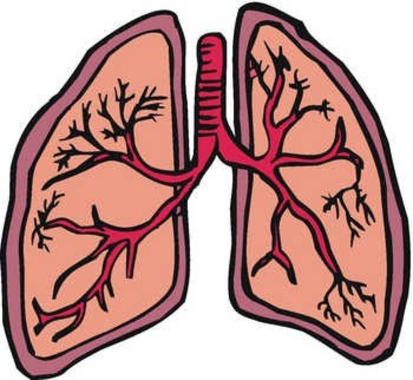 Lung | Free Images at Clker.com - vector clip art online ...