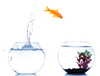 Fish Bowl Jumping Leap Day Image