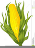 Free Clipart Of Corn Stalks Image