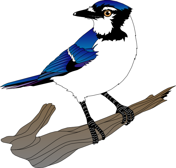 Bird Clip Art At Clker Com Vector Clip Art Online Royalty Free Amp Public Domain