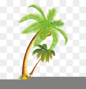 Green Coconut Clipart Image