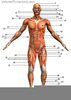 Free Cliparts Body Parts Image