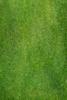 Grass Image