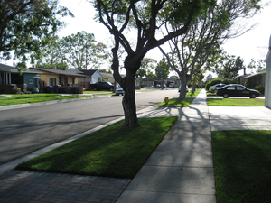 Neighborhood Street Image